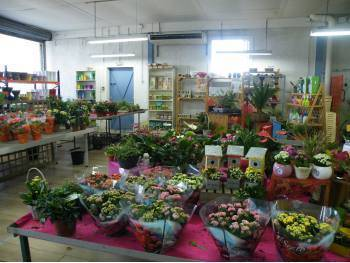 Jardinerie Fleuriste à reprendre dans le Vaucluse
